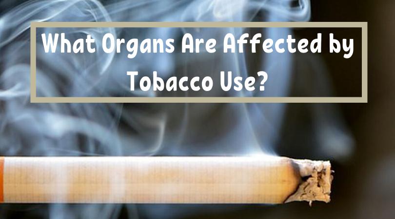 What Organs Are Affected by Tobacco Use_